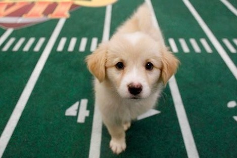2012 Puppy Bowl: Starting Lineup, Start Time and TV Info