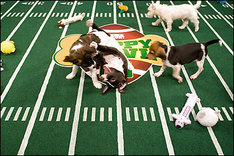 Puppy Bowl 2012: Why the Ridiculous Event Isn't Worth Watching
