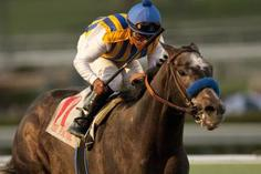 San Carlos Stakes: The Factor Fastest to the Wire over Amazombie