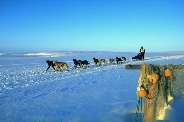 Iditarod Dog Sled Race: Dates, Start Time and Event Info