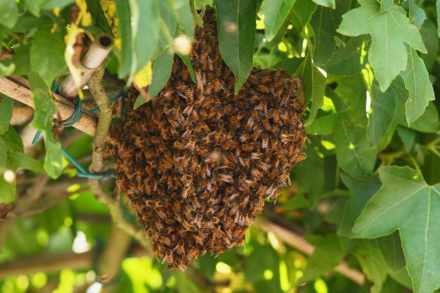 D-Backs vs. Giants in Spring Training: 2012 Rivalry Begins with Swarm of Bees