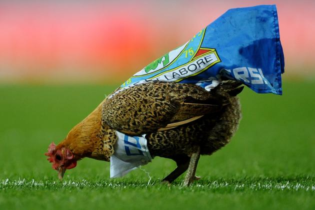 World Football Strange but True: Ewood Chicken Steals Show at Blackburn Game