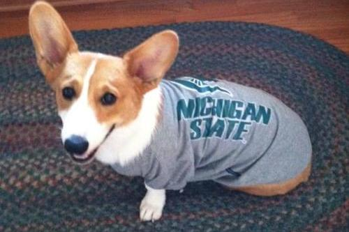 Big Ten Football Morning Coffee: It's a Corgi in a Spartan Shirt, People