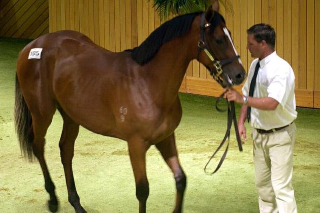 Unraced Virtual Horse Sells for $5,250