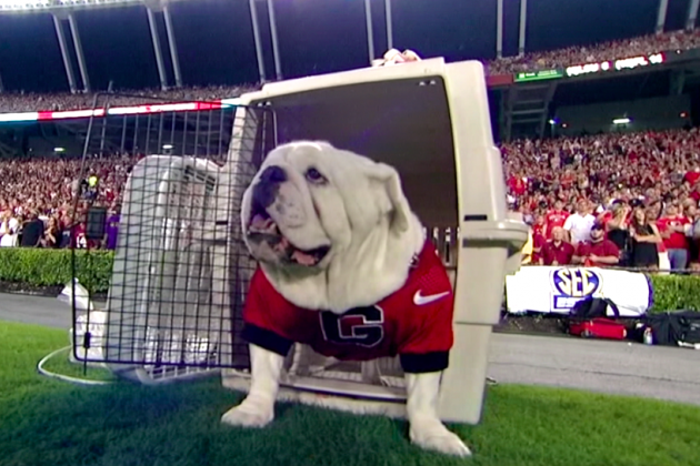 Georgia vs. South Carolina: Uga the Dawg Prodigy