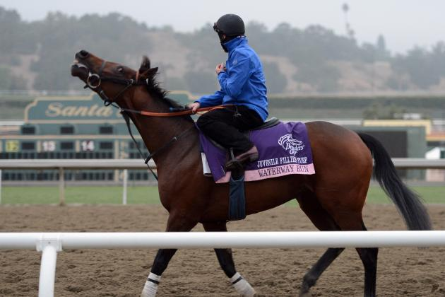 Breeders' Cup 2012: Analysis and Preview of the $500,000 Marathon