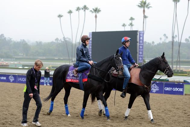 Breeders' Cup Entries: Big-Name Horses You Need to Know About