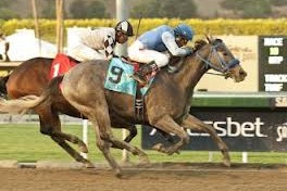 Racing at Hollywood Park with Marc Doche: Tilde Vulnerable in Sharp Cat