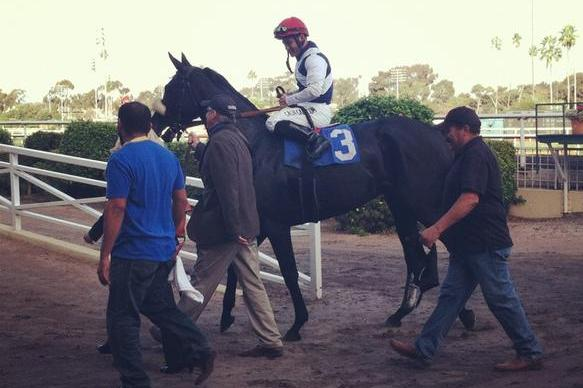Zenyatta's Little Sis, Eblouissante, Shines Bright in Debut (Video)