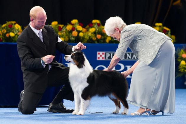 National Dog Show 2012: Compelling Storylines for This Year's Event