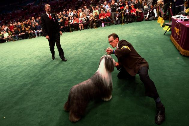 National Dog Show 2012: Top Reasons to Watch NBC Spectacle