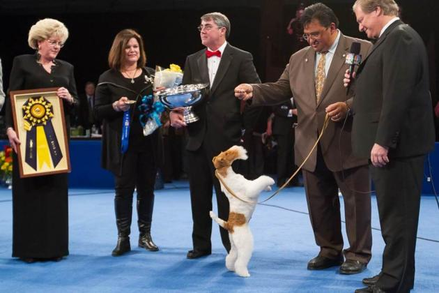 National Dog Show 2012: Increased Ratings Show Massive Interest in Event