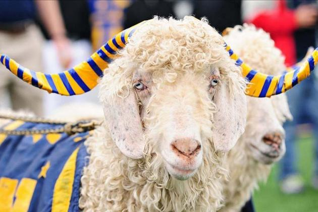 Navy's Bill the Goat Kidnapped Then Returned Ahead of Army Rivalry Clash