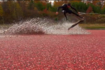 Wakeboarding. In a Cranberry Bog. You're Welcome.