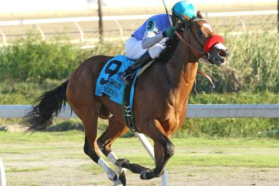 Goldencents Heads Field of 6 in Sham Stakes