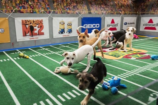 Puppy Bowl 2013: Breaking Down Contenders for Most Valuable Pup