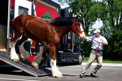 Super Bowl Commercials 2013: Budweiser Clydesdales Return in 'Brotherhood' Ad