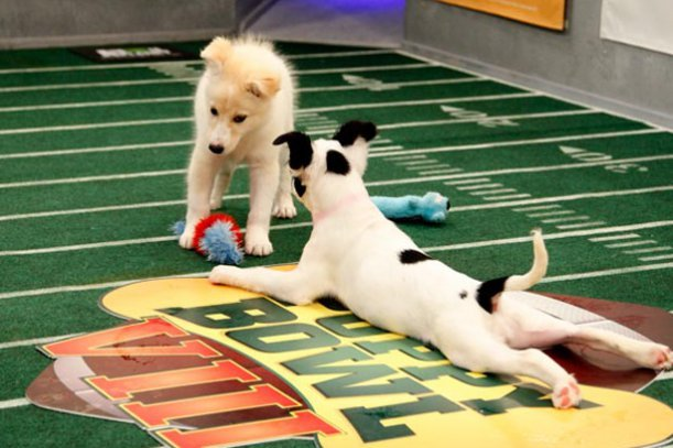 Puppy Bowl 2013: Recap, MVP and Twitter Reaction