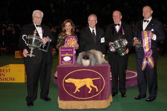 Westminster Dog Show 2013: Complete Viewers Guide to Event