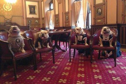Georgetown and Butler Bulldogs: Adorable Meeting (PHOTOS)