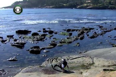 VIDEO: Phil Mickelson Wipes out on the Rocks at Pebble Beach