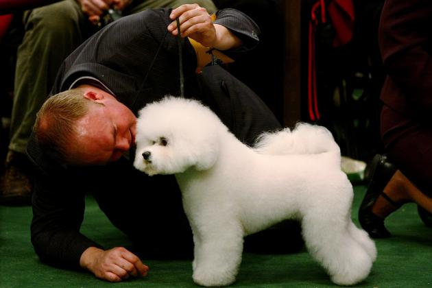 Westminster Dog Show 2013: New Changes Are Great for the Event