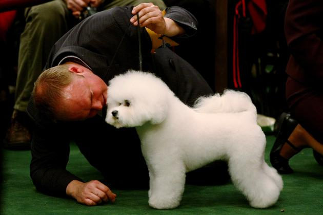 Westminster Dog Show 2013 Schedule: Full Coverage Info for Entire Event