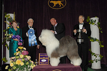 2013 Westminster Dog Show: Awesome Pups We'll Remember Most from Annual Pageant