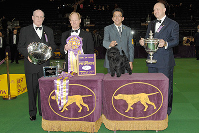 Westminster Dog Show 2013 Results: Recapping Winners at Madison Square Garden