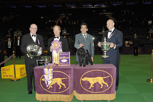 2013 Westminster Dog Show: How This Year's Changes Impacted the Competition