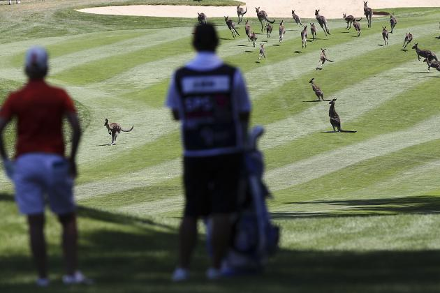 There Was a Kangaroo Delay at the Australian Open