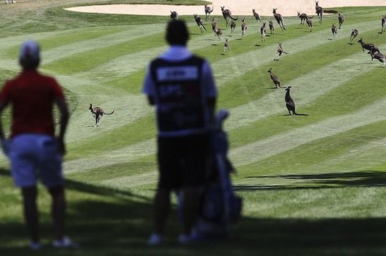 Golf-Hating Kangaroos Delay LPGA Australian Open