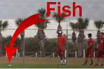 Fish Fell from Sky at Nationals Spring Training