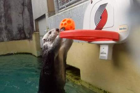 Meet Eddie, The Dunking Sea Otter [Video]