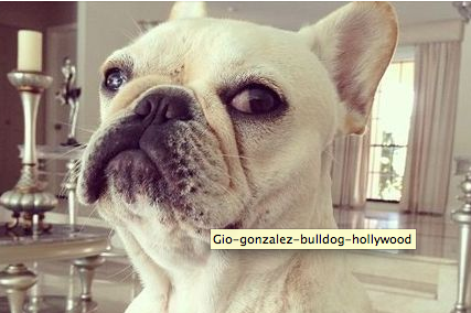 Gio Gonzalez Got Rug Burn on His Forehead from Wrestling with His Bulldog