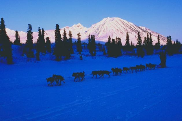 Iditarod 2013: Craziest Facts About World's Premier Sled Dog Race