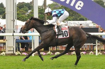 Habibi Rebounds to Win New Zealand Derby
