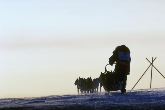 Iditarod 2013: Martin Buser Runs Risk of Burning Out After Furious Start to Race