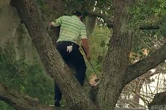 Sergio Climbs Tree, Hits Fairway