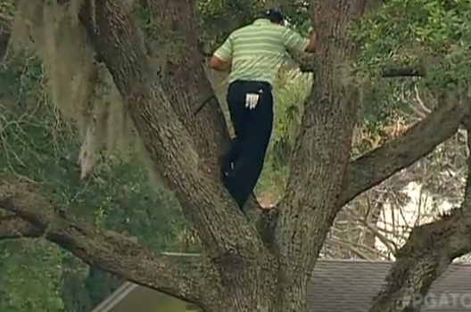 Sergio Garcia Hits Ball out of a Tree at Bay Hill