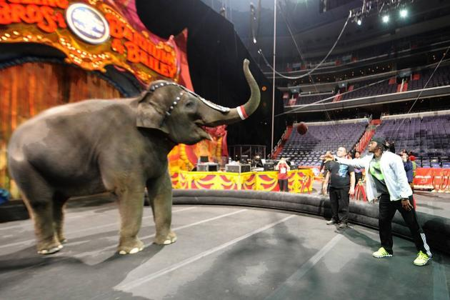 RG3 Passing Football to Circus Elephant Means Rehab Is Apparently Going Well