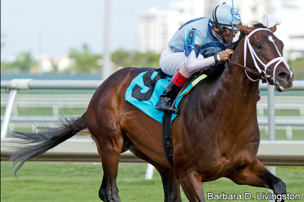Wood Memorial 2013: Verrazano's Win Makes Colt a Kentucky Derby Contender