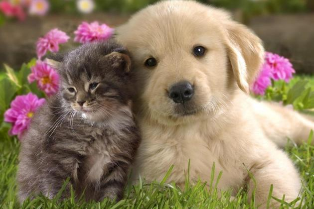 Hallmark Channel Wages War on Puppies with Super Bowl Sunday 'Kitten Bowl'
