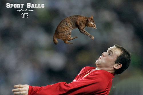 Imagine a Wonderful World Where Sports Balls Are Replaced with Cats