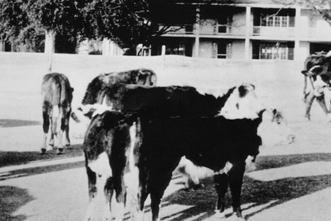 The World's Most Famous Golf Course Was a Cow Pasture in WWII