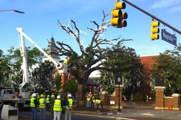 PHOTO: Toomer's Oaks Getting Removed at Auburn