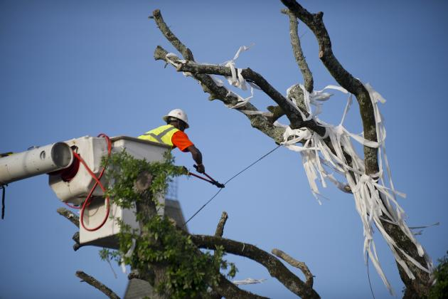 Toomer's Corner Trees: Auburn Wise to Move Forward with Renovation Plan in 2013