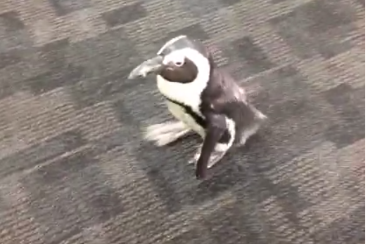 Watch: Penguins Hanging Around with Rays in Clubhouse