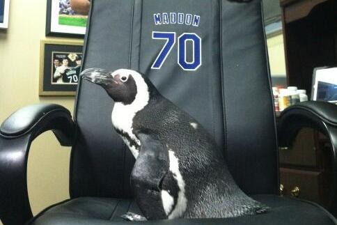 There Are Penguins in the Rays' Clubhouse