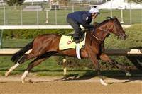 Kentucky Derby 2013: Early Non-Favorites to Keep Your Eye On
